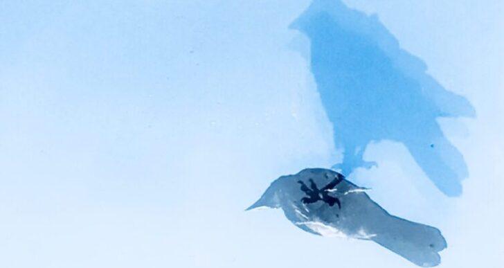 Nicht TikTok, aber TokTok oder Die Taube auf dem Dach…